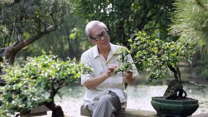 bonsai-caretaker